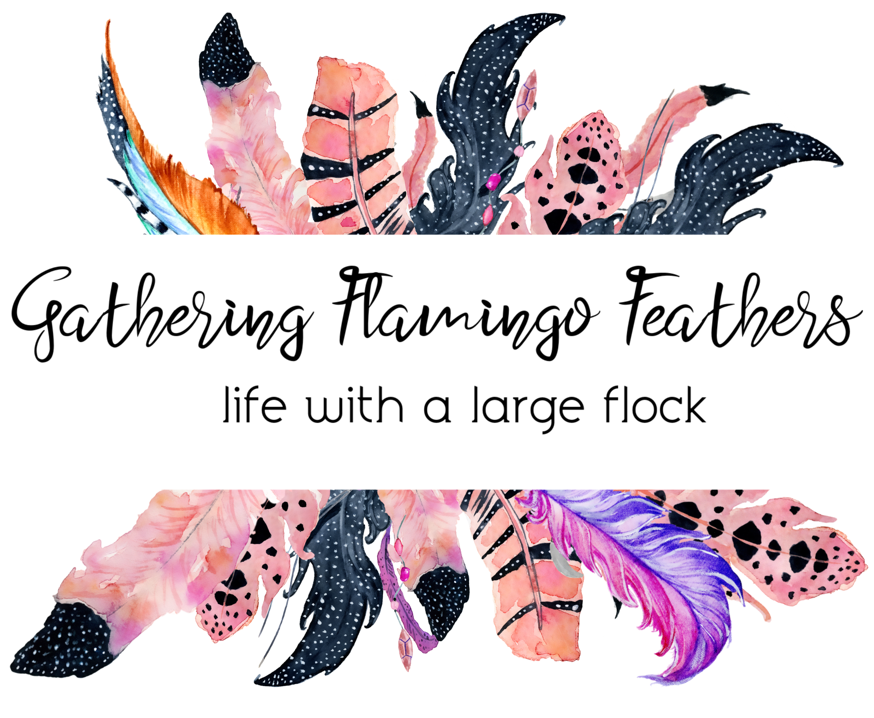 FlamingoFeathersHeader